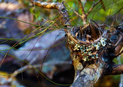 Springwood Nest - David